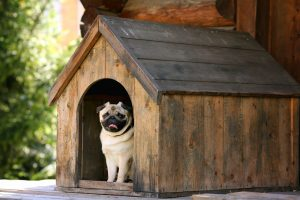 Funny,Pug,Dog,In,The,Dog,House